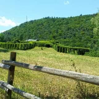 The Cascata del Lupo Path - P2